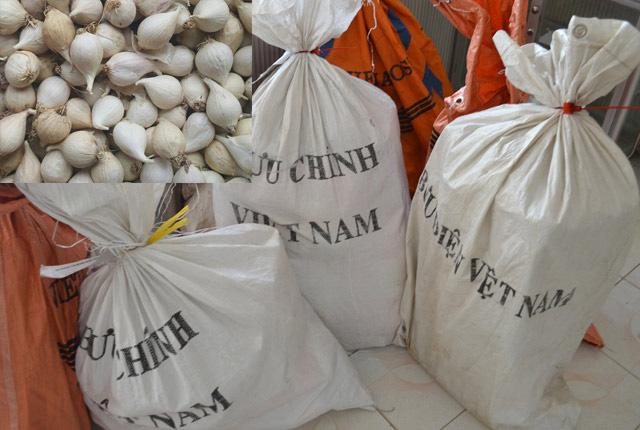 Tỏi Lý Sơn được vận chuyển về đảo qua đường bưu điện.