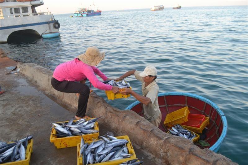 Hải sản được đưa vào bờ bằng thúng chai.