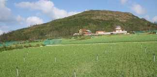 Nhiều diện tích đất công ở Lý Sơn cho thuê sai quy định