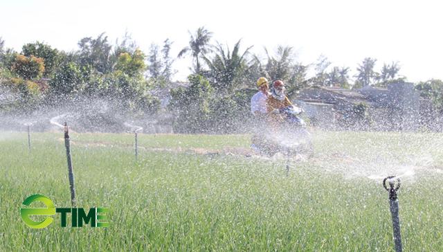 Sử dụng béc phun để tưới cho hành tỏi nhằm tiết kiệm nước.