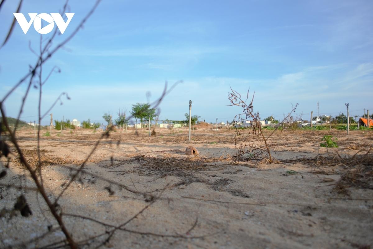 """""""Thủ phủ"""" hành tỏi Lý Sơn, tỉnh Quảng Ngãi là hàng trăm héc ta đất nông nghiệp bị bỏ hoang nhiều tháng nay."""