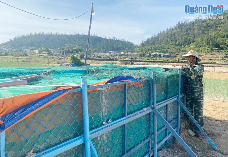 Người dân Lý Sơn xây bể chứa nước để làm dịch vụ tưới nước thuê.