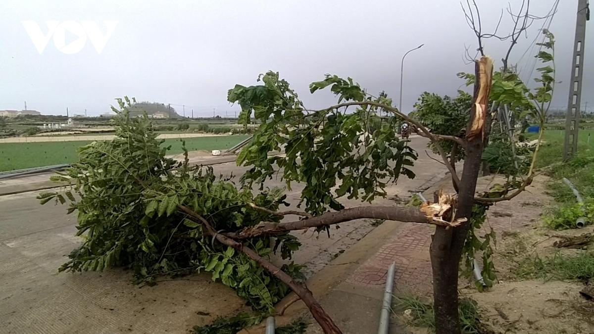 Nhiều cây xanh trên đảo cũng ngã đổ do bão.