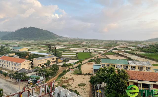 Một cánh đồng trồng hành, tỏi của người dân Lý Sơn.